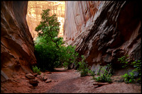 bt.slot.canyon-2.2002.kinney