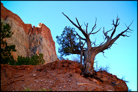 bt.tree6.canyon wall.2002.kinney
