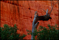 bt.tree.canyon wall.2002.kinney